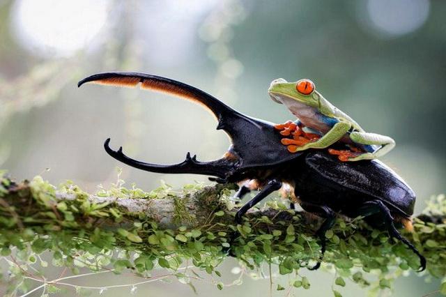 Любовь к путешествиям в мире животных