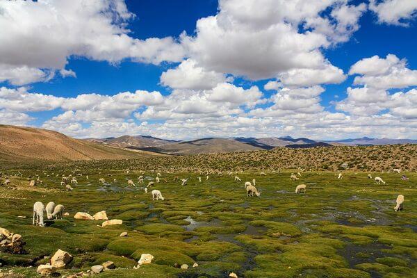 География и климат плато Альтиплано