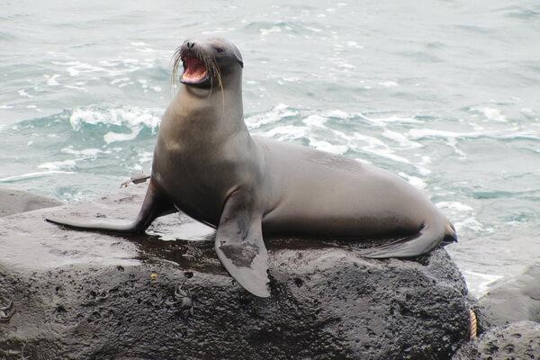 Животные Галапагосс - Животный мир Галапагосс - Галапагосские морские львы