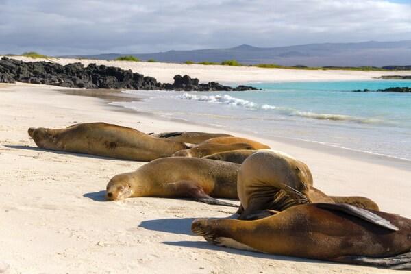 Животный мир Галапагосс - Галапагосские морские львы