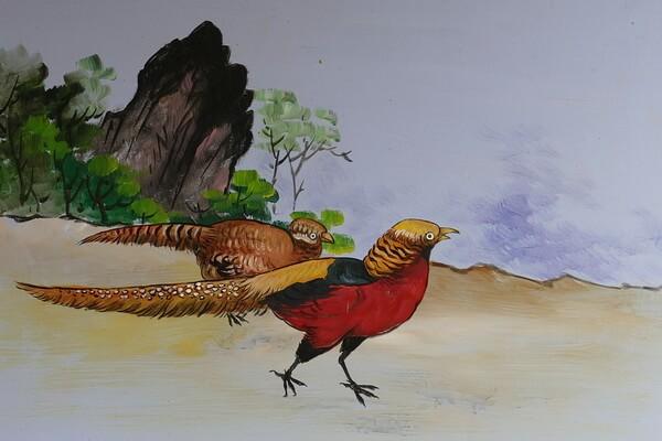 Животные Китая с фото и описанием - Обыкновенный фазан