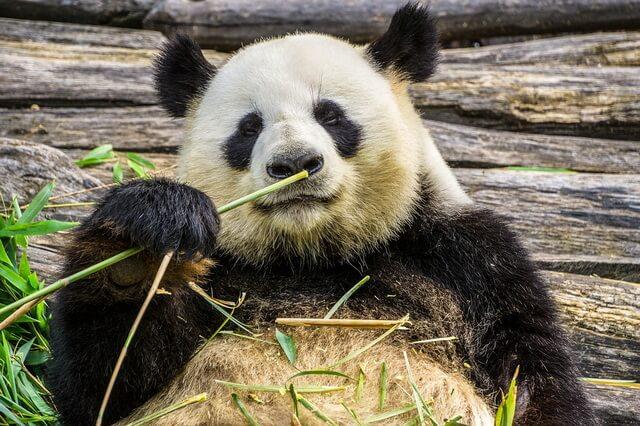 Животный мир Китая - основные виды фауны с фото, названиями, описанием