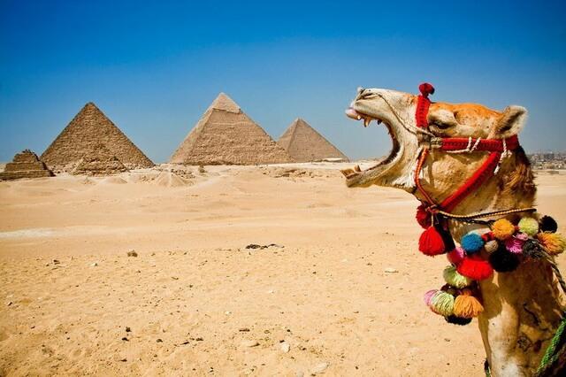Животные Египта - основные виды египетской фауны с фото и описанием