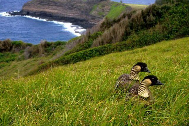 Гавайские птицы и животные - уникальная фауна Гавайев