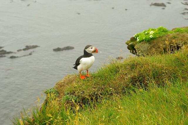 Животные Исландии - уникальная фауна с фото и описанием