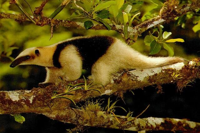 Животные и птицы Никарагуа с фото и описанием - уникальная фауна страны