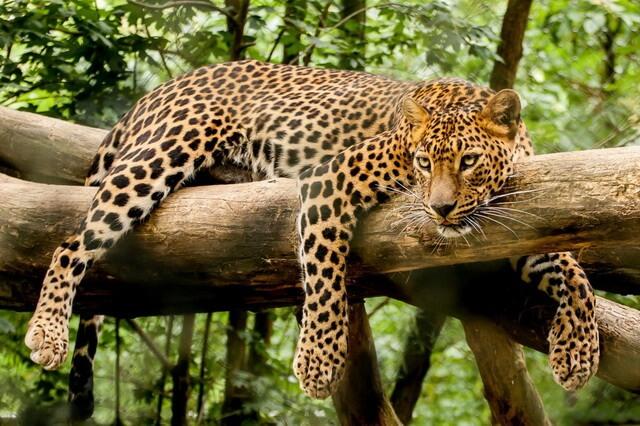 Животные Шри-Ланки с фото и описанием - ТОП-8 основных видов