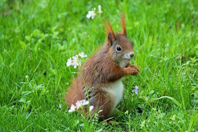 Животные Великобритании - основные виды с фото и описанием