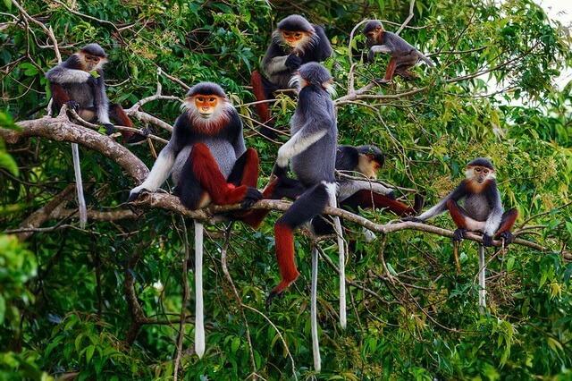 Животные Вьетнама с фото и описанием