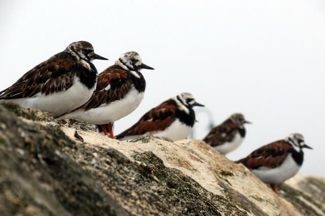 Птицы Арктики - фото, названия, описание арктических пернатых