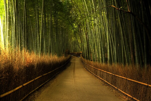 Бамбуковый лес Сагано - история создания
