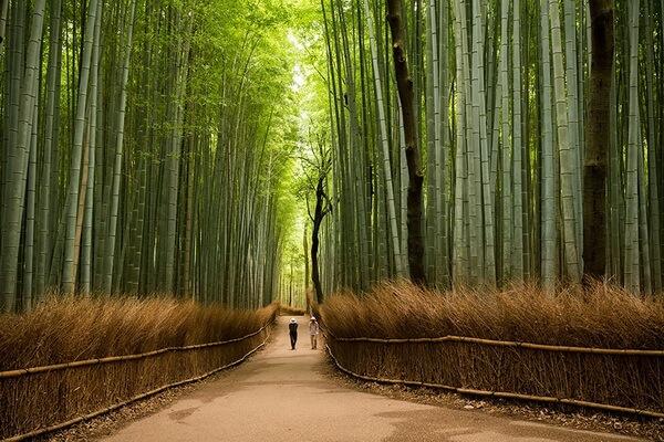 Бамбуковая роща Сагано - история возникновения