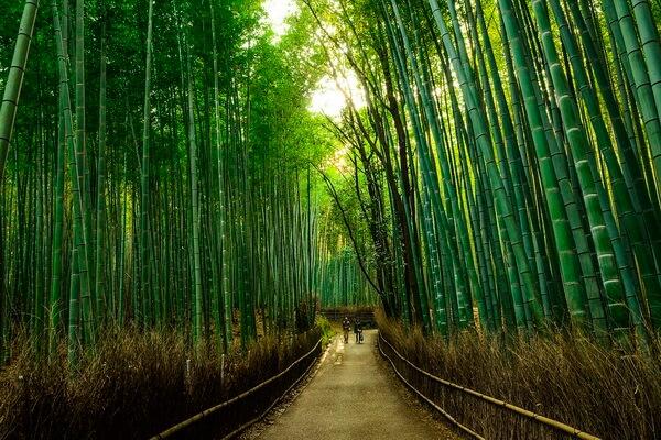 Бамбуковый лес Сагано в Японии - фото