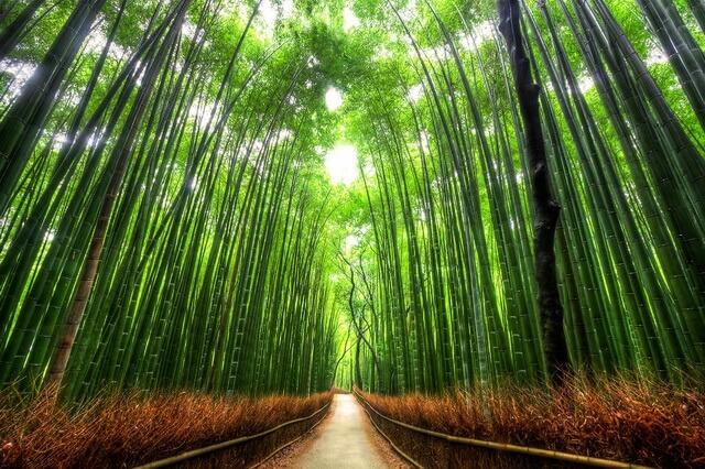 Бамбуковый лес Сагано в Японии