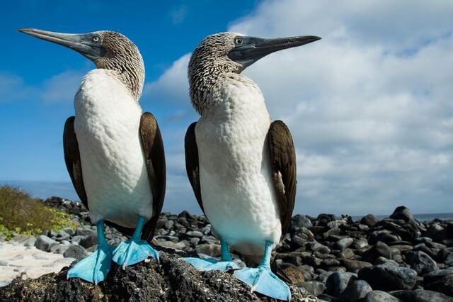 Птицы Галапагосских островов - Основные виды с фото и описанием