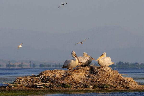 Фауна Греции - Птицы национального парка Преспа
