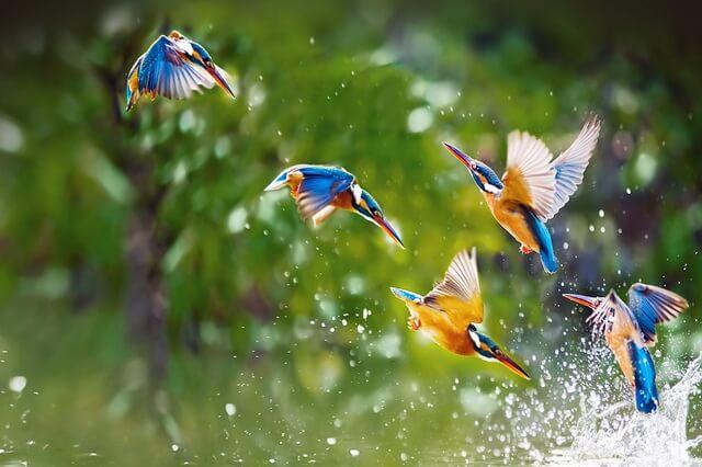 Бердвотчинг - наблюдение за птицами в дикой природе