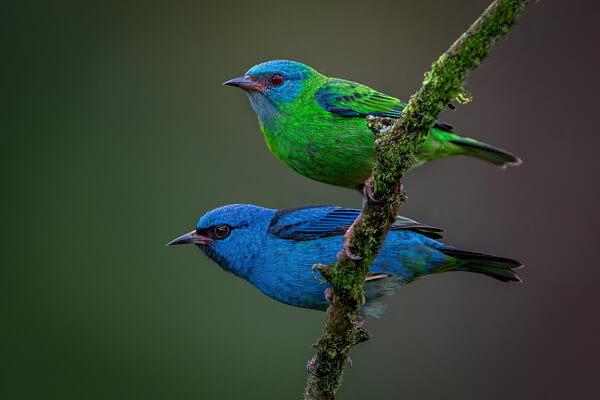 Почему животные синего цвета редко встречаются в природе