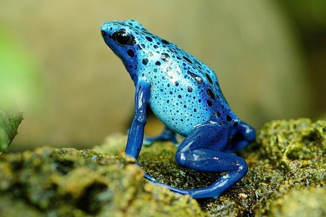 Животные голубого и синего цвета с фото и описанием - ТОП-10 уникальных видов