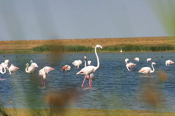 Чудеса природы Казахстана с фото и описанием - Озеро Тенгиз