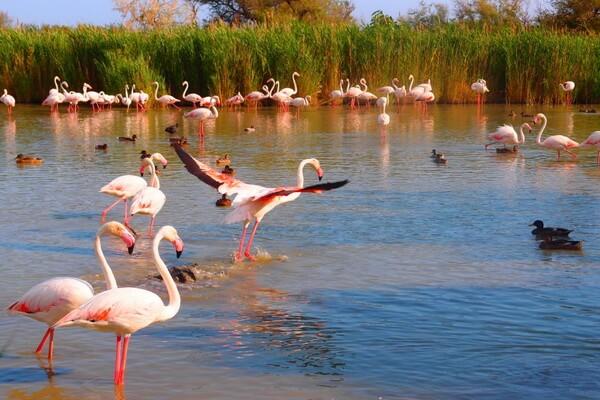 Природные достопримечательности Казахстана с фото и описанием - Озеро Тенгиз