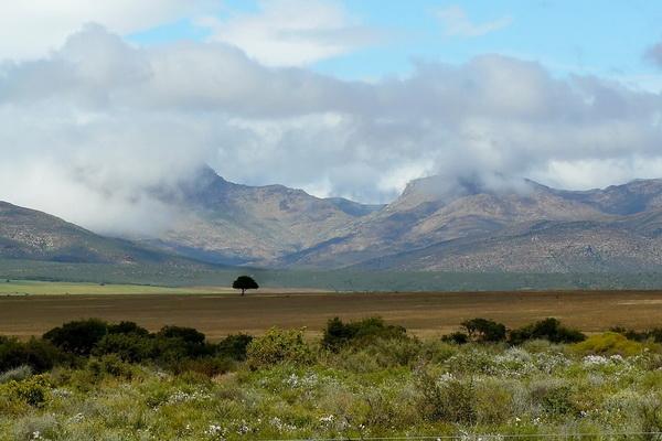 Цветущие просторы Южной Африки
