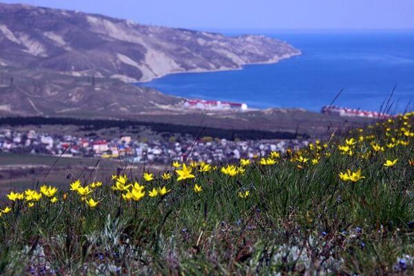 Основные места, где цветут дикие тюльпаны в Крыму