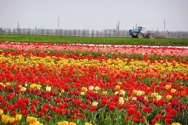 Село Янтарное – «крымская Голландия»