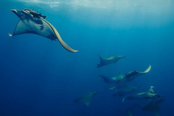 Дайвинг в Коста-Рика - популярные дайв-сайты страны для изучения морской фауны