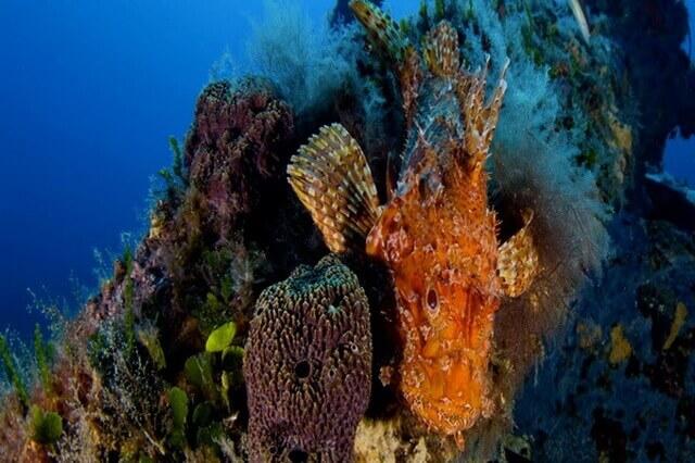Дайвинг в Европе - лучшие страны и дайв-сайты для подводных погружений