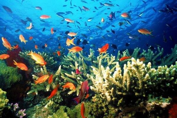 Условия для дайвинга на Фиджи