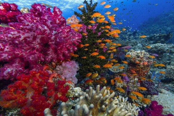 Дайвинг на Фиджи - Дайв-сайт «Вода Блая»