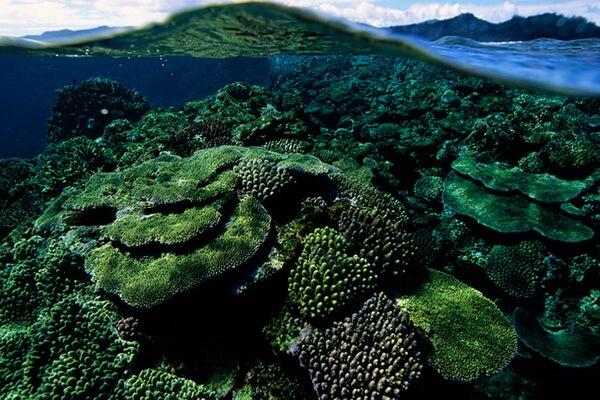 Лучшие места для дайвинга на Фиджи - Риф Большая Астролябия