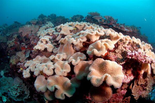 Дайвинг на Фиджи - Остров Кандаву