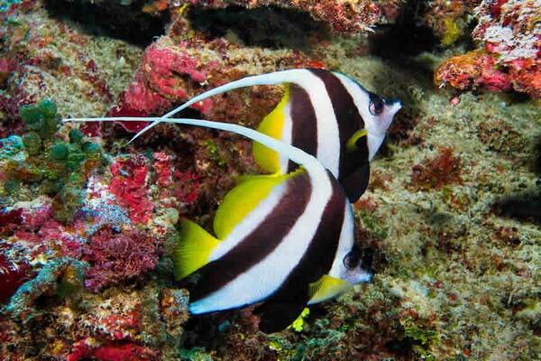 Лучшие места для дайвинга на Фиджи - Радужный риф острова Тавеуни