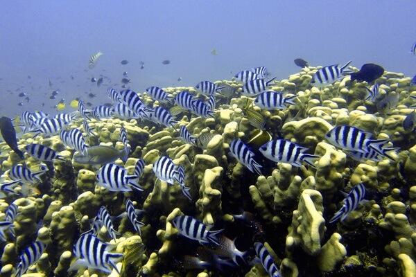 Дайв-сайты Фиджи - Остров Ясава