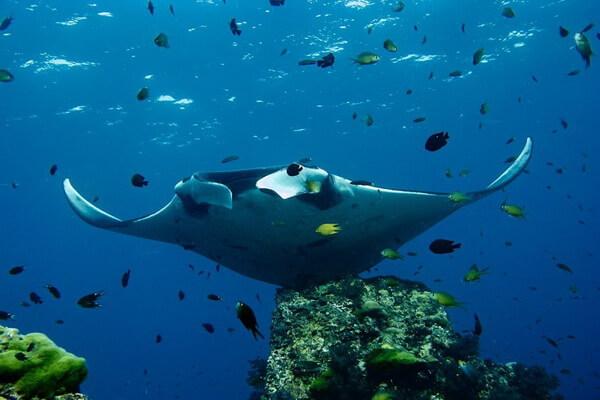 Лучшие места для дайвинга на Фиджи - Остров Ясава