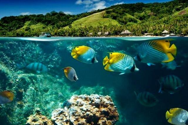 Дайвинг на Фиджи - основные дайв-сайты