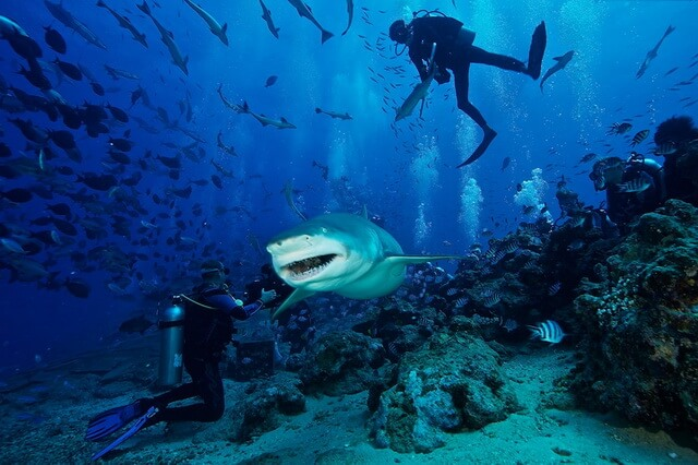 Дайвинг с акулами - ТОП-10 лучших мест
