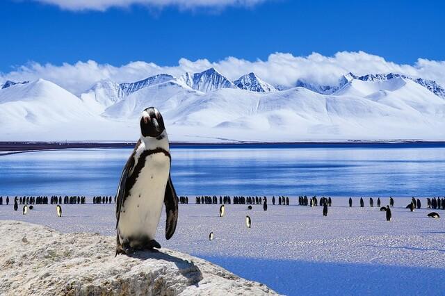 Фауна Антарктиды - уникальный животный мир ледяного континента