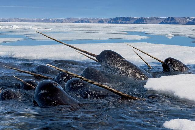 Фауна Арктики - основные животные с фото и описанием