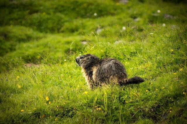 Животные и птицы Австрии - фото, названия, описание