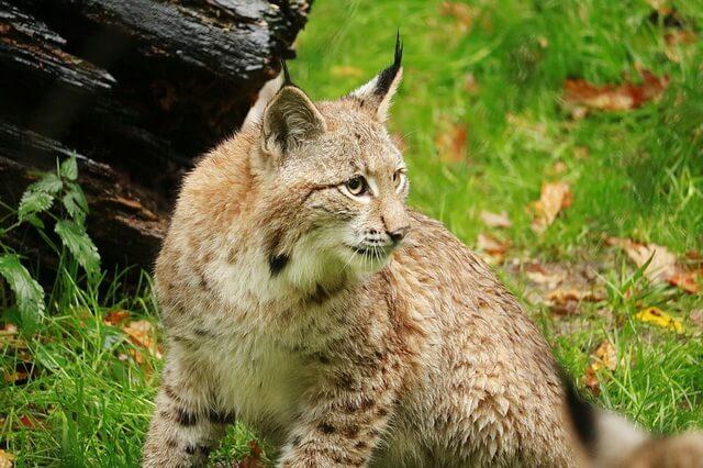 Животные Бельгии - фото, названия, описание