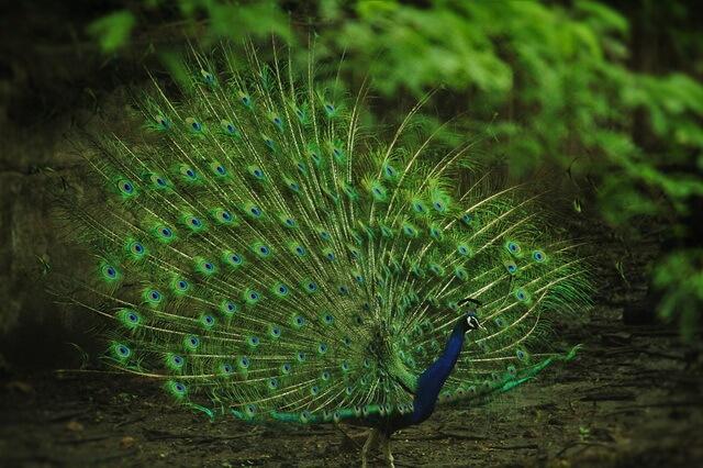 Фауна Индии - основные животные страны с фото и описанием