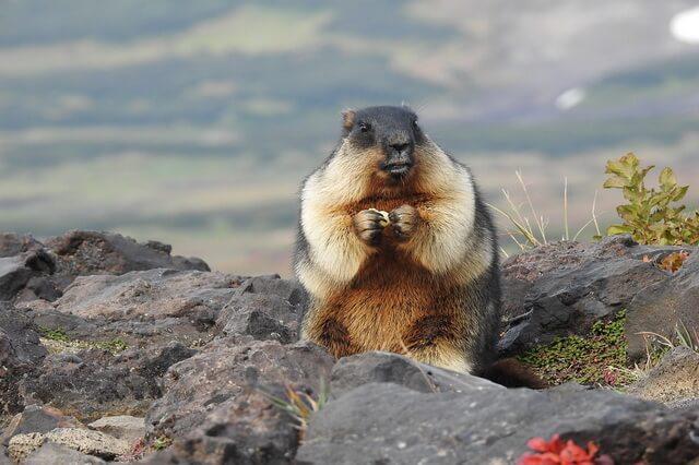 Животные Камчатки - уникальная фауна Камчатского края