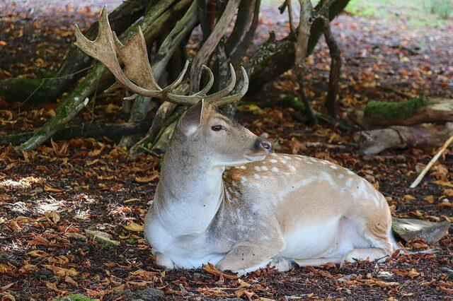 Животные Куршской косы - фото и описание