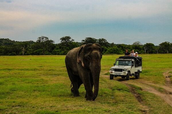 Фауна Лаоса - животные с фото и описанием - Азиатский слон