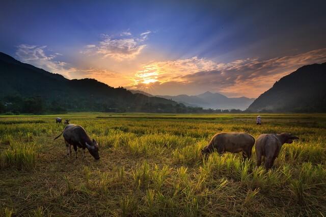 Фауна Лаоса - основные животные страны