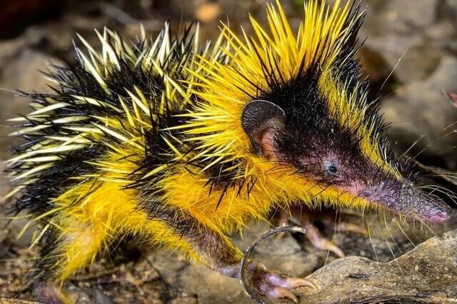 Фауна Мадагаскара - основные животные-эндемики с фото и описанием