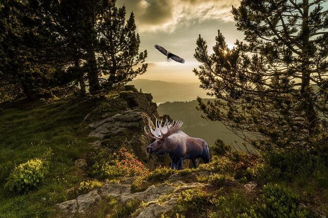 Животные Норвегии - фото, названия, описание